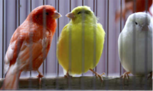 Canaries on a perch - getting social for your business on Twitter can be great fun!