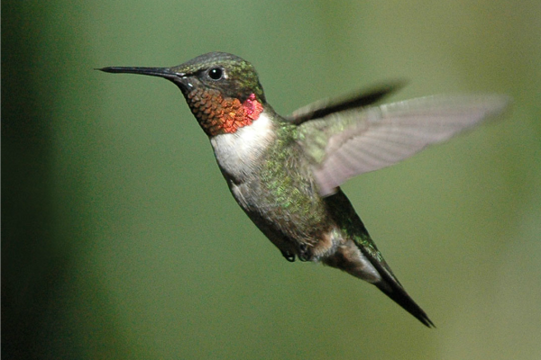 Hummingbirds can teach us about social media