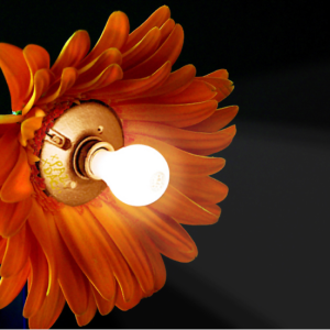Lightbulb Flower