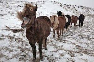 Follow Friday Horses