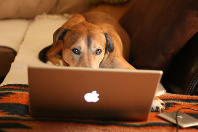 Idea Girl Media works like a dog to manage your social media!