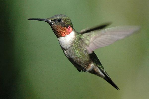 Hummingbirds can teach us about social media